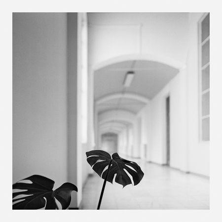 写真 Canovas - ACHING PLANTS - 2