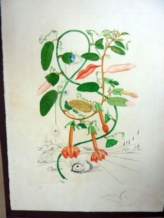 多数の Dali - Cobea (Pisum Sensuale)