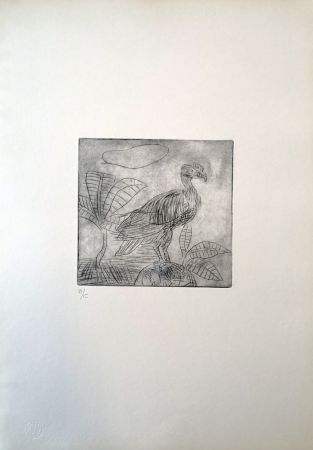ポイントーセッシュ Ligabue - Condor