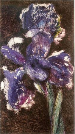 リトグラフ Kentridge - Dutch Iris II