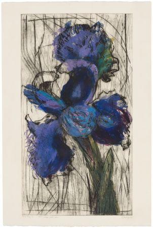 エッチングと アクチアント Kentridge - Dutch Iris (Trial Proof B)