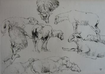 彫版 Vergé-Sarrat - Etudes de moutons / Studies of Sheep