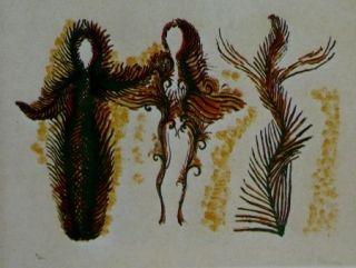 リトグラフ Fenosa - Femmes lianes