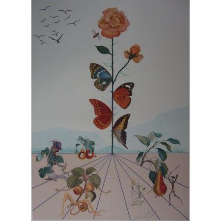 リトグラフ Dali - Flordali Ii : La Rose Papillon