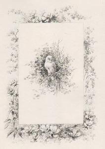 挿絵入り本 Giacomelli - Histoire d'un merle blanc. Compositions de Hector Giacomelli gravées à l'eau-forte par L. Buisson.