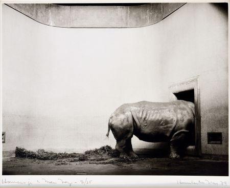 写真 Rivas - Homenaje a Man Ray