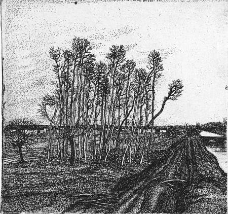 エッチング Bozzetti - Il boschetto lungo l'argine (II versione)