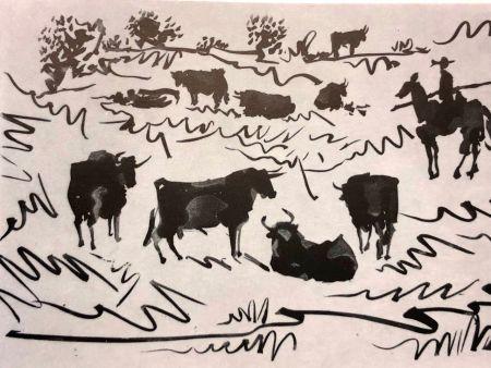 ポイントーセッシュ Picasso - La Tauromaquia