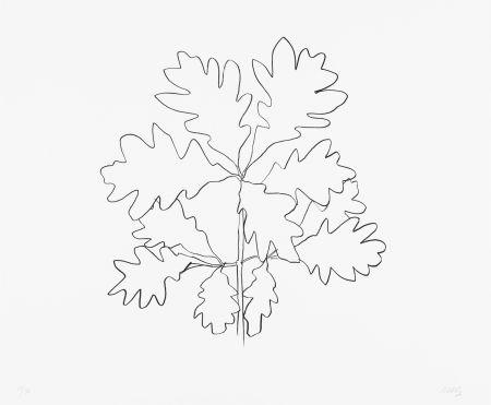 リトグラフ Kelly - Oak VI