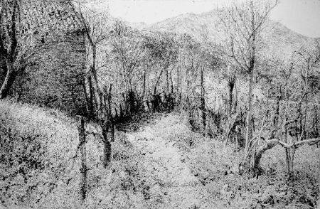 エッチング Barbisan - Paesaggio in collina