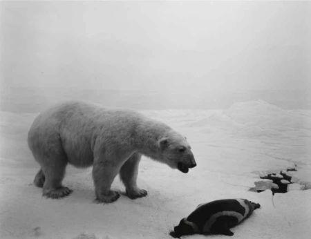 リトグラフ Sugimoto - Polar Bear