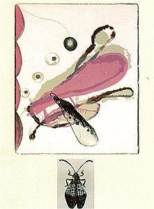 リトグラフ Brown - Souvenirs entomologiques 6