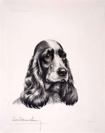 エッチング Danchin - Tête de Cocker femelle - Black and white Cocker Spaniel head