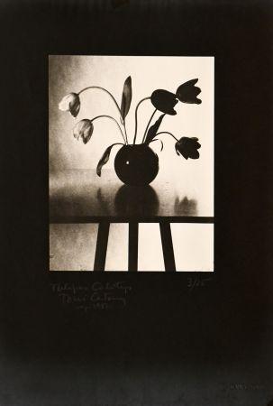 写真 Catany - Tulipes