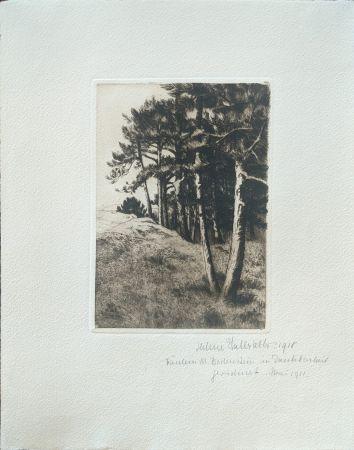 ポイントーセッシュ Haasbauer-Wallrath - Untitled (Kiefern am Waldrand)