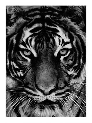 リトグラフ Longo - Untitled (Tiger)