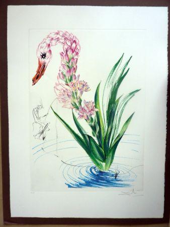 彫版 Dali - Water Hibiscus Plus Swan (Florals)
